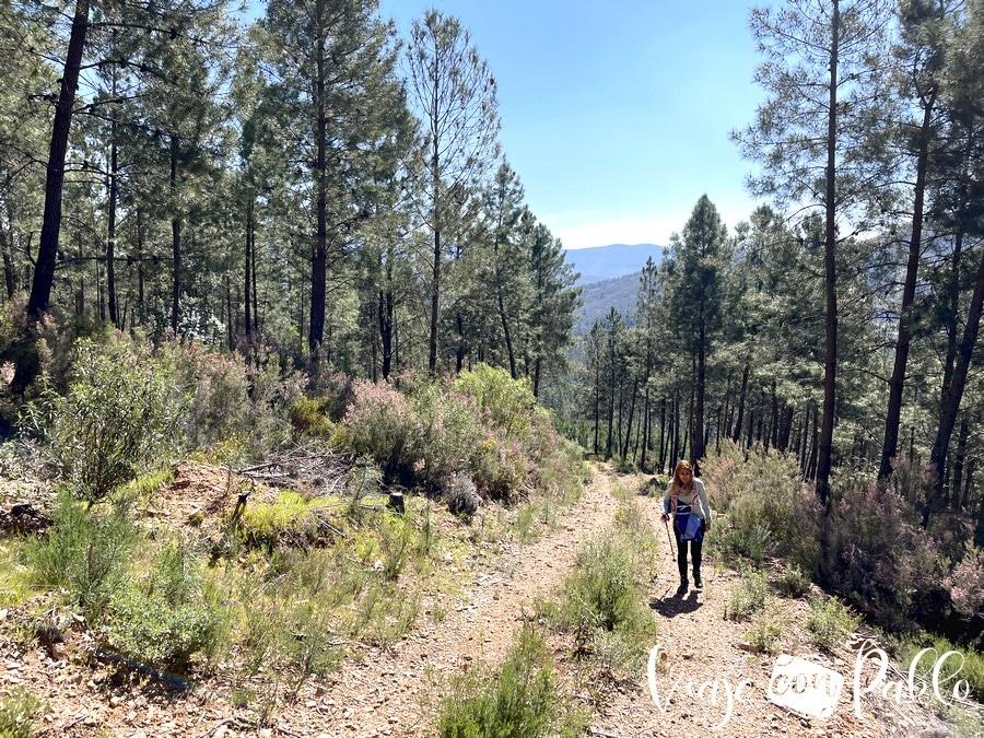 Subida entre pinos en el tramo más duro de la ruta