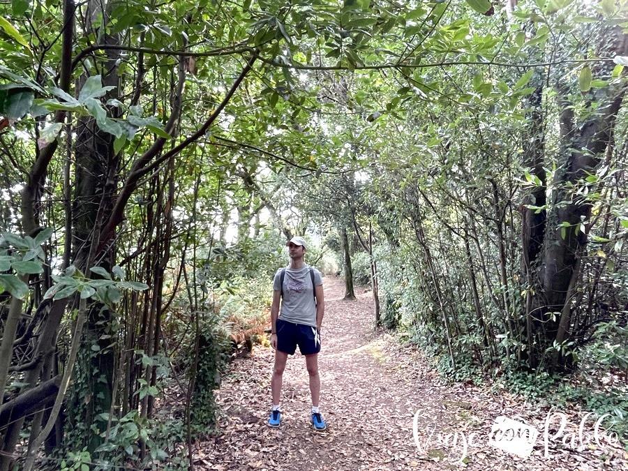 Bosque de la isla de Cortegada