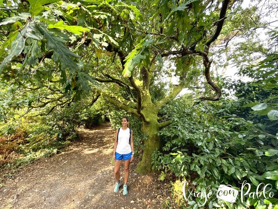 Bosque de laureles y robles en Cortegada